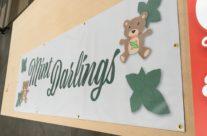 Mint Darlings Banner