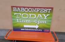 Baboon Fest Signs