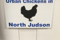 Urban Chicken Signs
